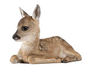 deer_masked